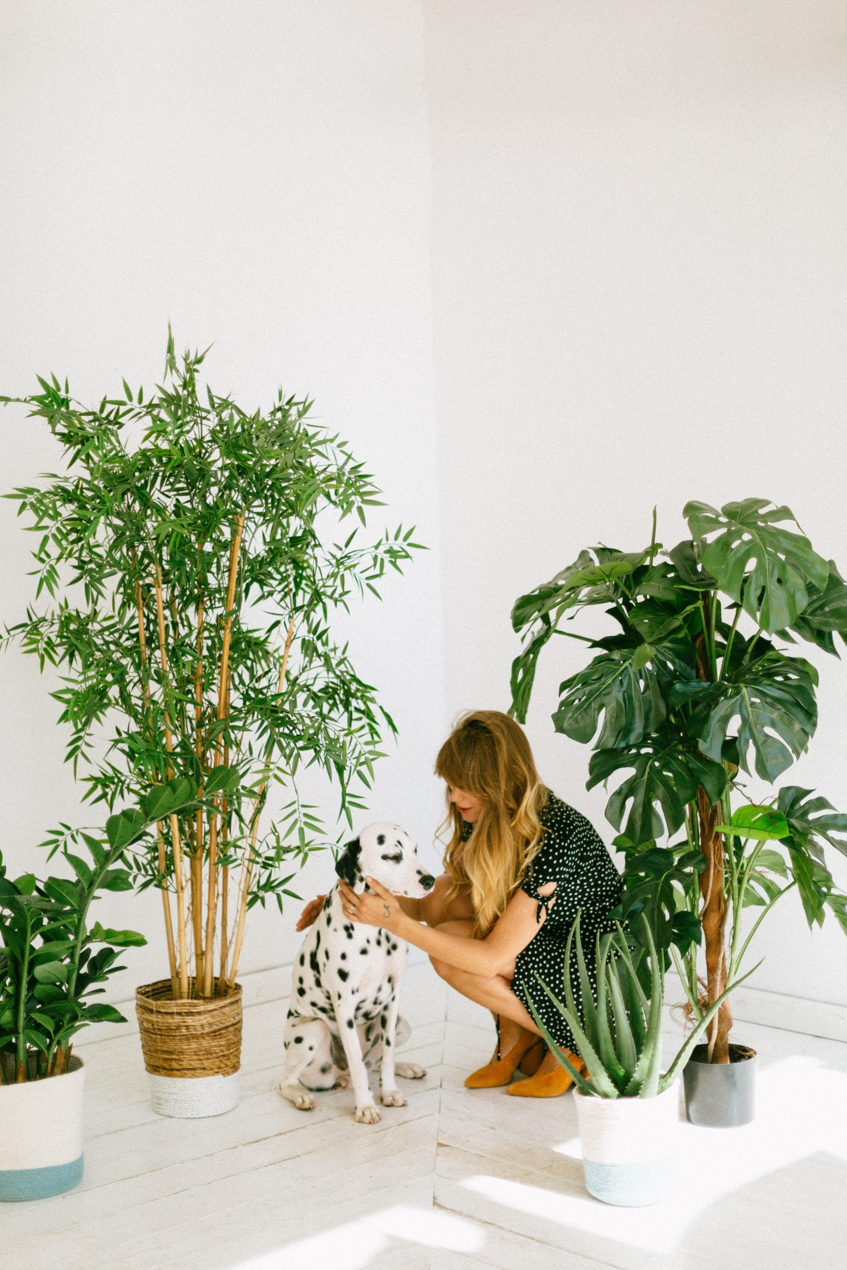The Best Artificial Trees For Indoors For 2021 Comfy Zen